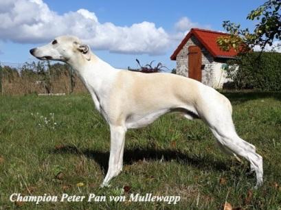 peter-pan-von-mullewapp_