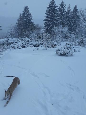 Whippets vom Bergschlösschen im Schnee