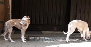 Bella und Bora